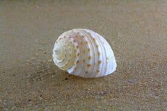 Overzeese shell op het zand Stock Afbeeldingen