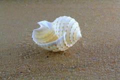 Overzeese shell op het zand Royalty-vrije Stock Foto's