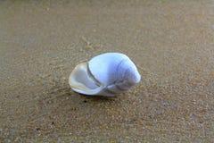 Overzeese shell op het zand Royalty-vrije Stock Afbeelding