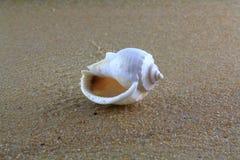 Overzeese shell op het zand Stock Foto's