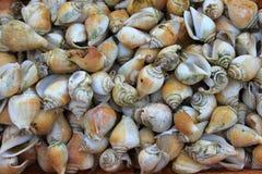 Overzeese shell op het zand Stock Foto
