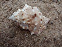 Overzeese shell op het zand geweven behang als achtergrond, royalty-vrije stock fotografie