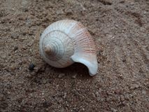 Overzeese shell op het zand geweven behang als achtergrond, strand Oceaan royalty-vrije stock fotografie