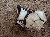 Overzeese shell op het zand geweven behang als achtergrond, strand Oceaan stock afbeeldingen