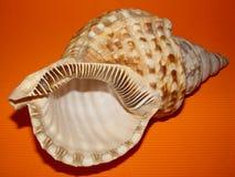Overzeese shell op Oranje Achtergrond Royalty-vrije Stock Fotografie