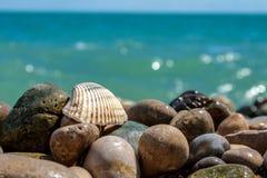 Overzeese shell op rotsen bij het overzeese ` s kiezelsteenstrand Royalty-vrije Stock Afbeeldingen