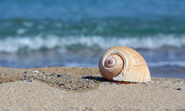 Overzeese shell op zandig strand Stock Afbeelding