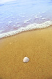 Overzeese shell op zandig strand Royalty-vrije Stock Foto's
