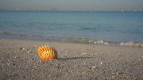 Overzeese shell op zandig strand, reisconcept met overzees op de achtergrond stock video