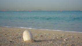 Overzeese shell op zandig strand, reisconcept met overzees op de achtergrond stock footage