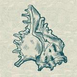 Overzeese shell Originele hand getrokken illustratie Stock Afbeelding