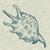 Overzeese shell Originele hand getrokken illustratie Stock Foto