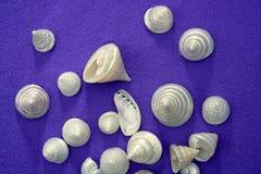 Overzeese shell over purpere blauwe textuur parelachtige alikruiken Stock Afbeeldingen