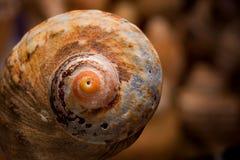 Overzeese shell textuur Royalty-vrije Stock Afbeeldingen