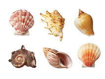 Overzeese shell vakantiereis Stock Fotografie