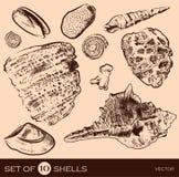 Overzeese shell vectorinzameling Originele getrokken hand Stock Fotografie