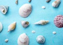 overzeese shell verfraait op blauw document, vers blauw de zomerpatroon Stock Afbeelding