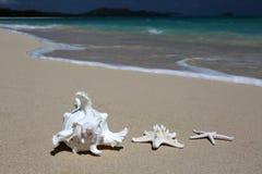 Overzeese shell zeester zandig strand Stock Afbeeldingen
