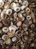 Overzeese shells stock foto