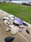 Overzeese shells stock fotografie