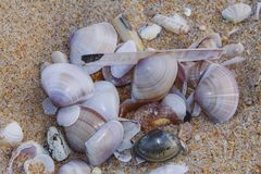 Overzeese shells royalty-vrije stock foto