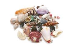 Overzeese shells Stock Foto's