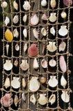 Overzeese shells Stock Afbeeldingen