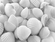 Overzeese shells Royalty-vrije Stock Foto's