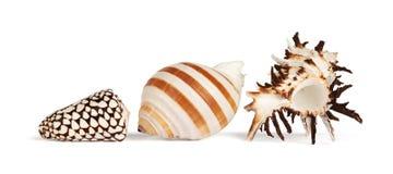 Overzeese Shells Royalty-vrije Stock Afbeelding