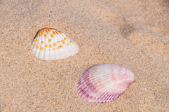 Overzeese shells Stock Fotografie