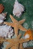 Overzeese shells. Royalty-vrije Stock Foto's