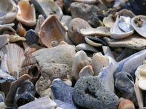Overzeese shells Royalty-vrije Stock Foto