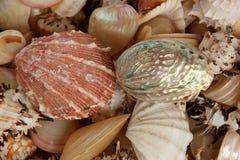 Overzeese shells stock afbeelding