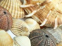 Overzeese shells achtergrond Royalty-vrije Stock Fotografie
