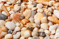 Overzeese shells achtergrond Royalty-vrije Stock Foto's