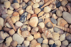 Overzeese shells achtergrond Stock Foto's