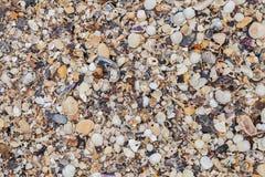 Overzeese shells achtergrond Overzeese shell textuur stock afbeeldingen