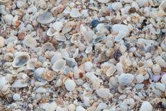 Overzeese shells als achtergrond Royalty-vrije Stock Fotografie