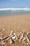 Overzeese shells bij het strand met exemplaarruimte Stock Fotografie