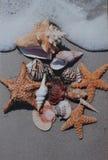 Overzeese Shells bij strand Royalty-vrije Stock Afbeeldingen