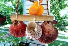 Overzeese Shells decoratie het hangen royalty-vrije stock foto