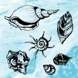 Overzeese shells decoratieve pictogrammen Royalty-vrije Stock Afbeelding