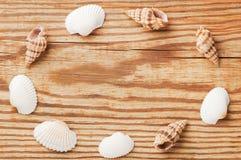 Overzeese shells die randkader op de houten raad vormen, hoogste mening Stock Foto