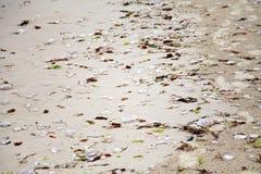 Overzeese shells en gestorven kwallen op het strand stock foto