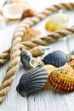 Overzeese shells en kabel stock afbeelding