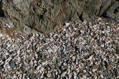 Overzeese shells en Kiezelstenen op een strand Royalty-vrije Stock Foto