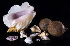 Overzeese shells en kokosnotensamenstelling op een zwarte achtergrond Royalty-vrije Stock Afbeeldingen