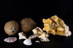 Overzeese shells en kokosnotensamenstelling op een zwarte achtergrond Stock Fotografie