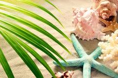 Overzeese shells en palm met zand als achtergrond Zeeschelpen royalty-vrije stock foto