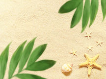 Overzeese shells en palm op de zandachtergrond Het strand van de zomer Royalty-vrije Stock Afbeelding